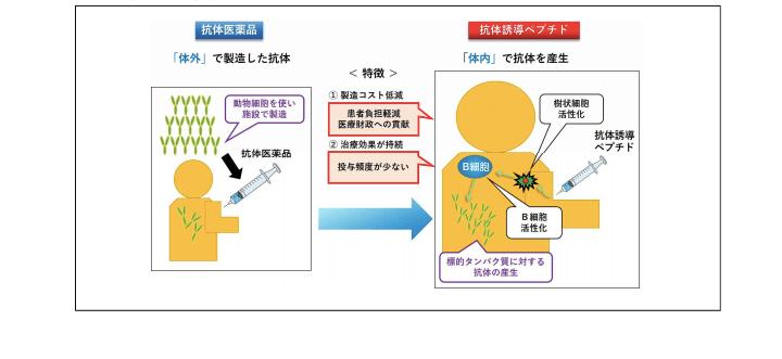 抗体誘導ペプチドの強み